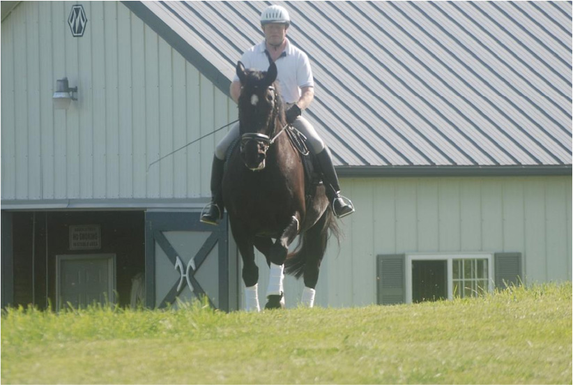 Horses Love Training Outdoords